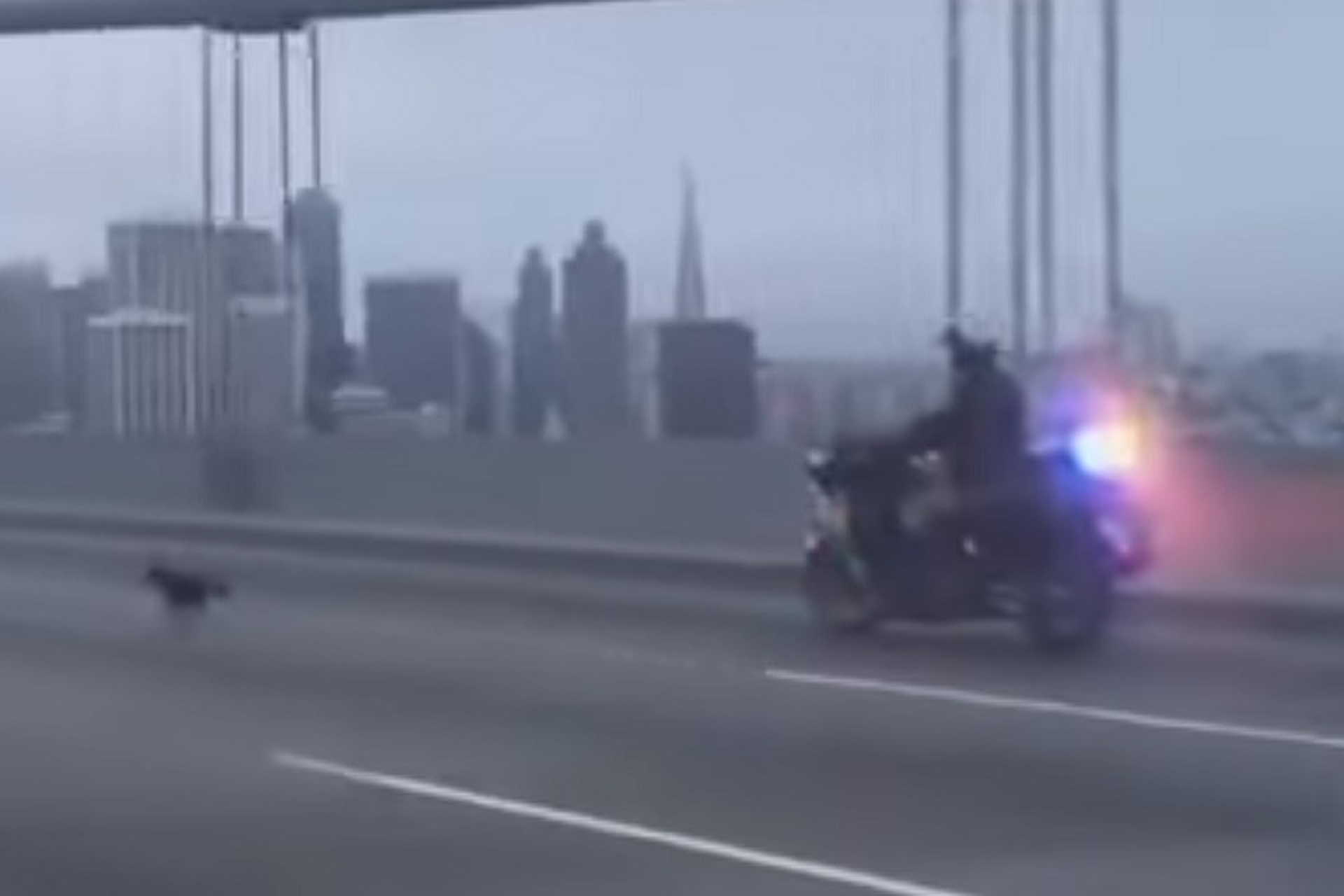 Watch Police Chase a Dog Across the San Francisco Bay Bridge