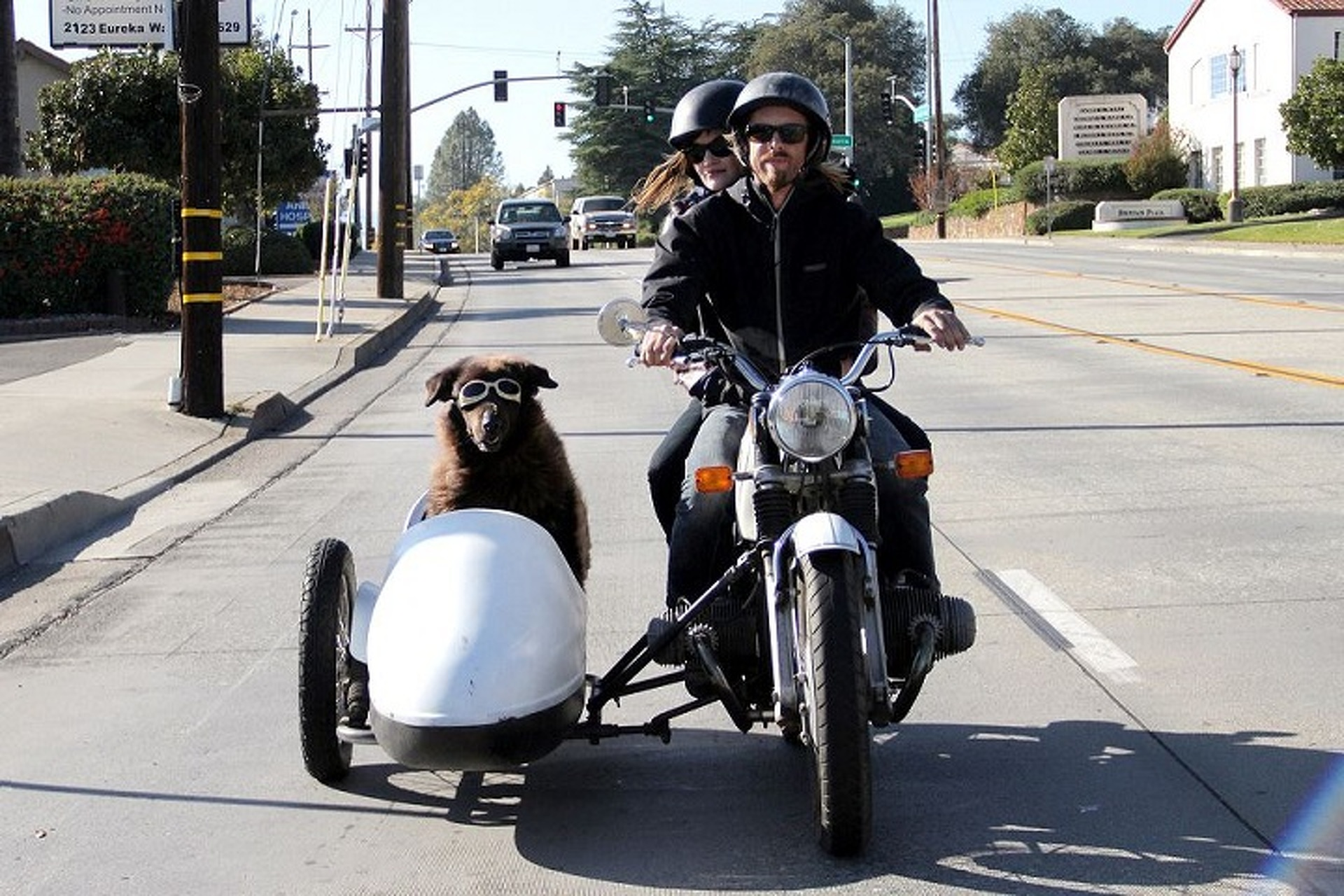 Dogs in Sidecars Movie Trailer Will Make You Smile