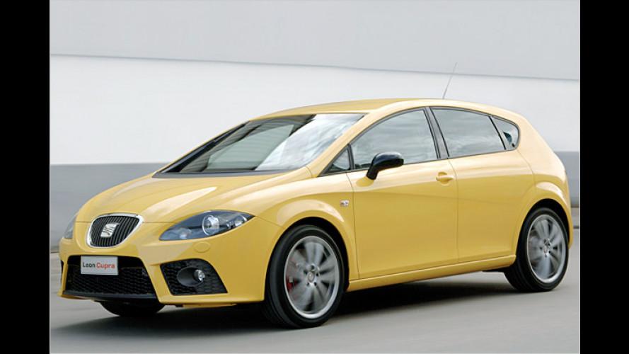 Seat León Cupra kommt mit 240 PS: Brüllender Löwe