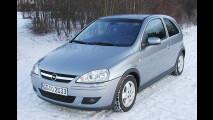 Junger Wilder von Opel