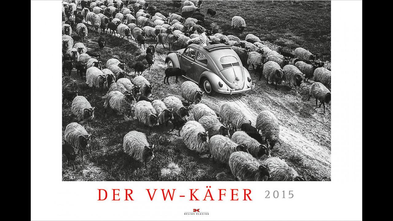 Der VW Käfer 2015