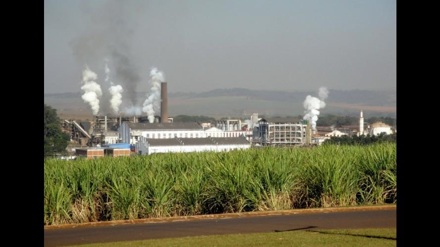 Biocombustíveis podem ameaçar países em desenvolvimento