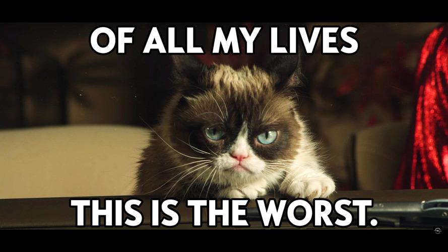 Grumpy Cat, Opel Takvimi çekimlerinde