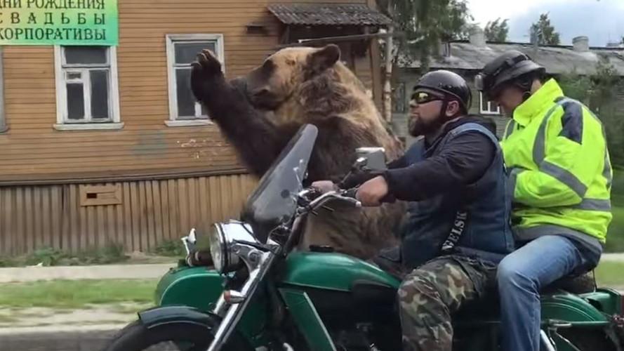 Motosikletin üzerindeki ayı insanları selamladı