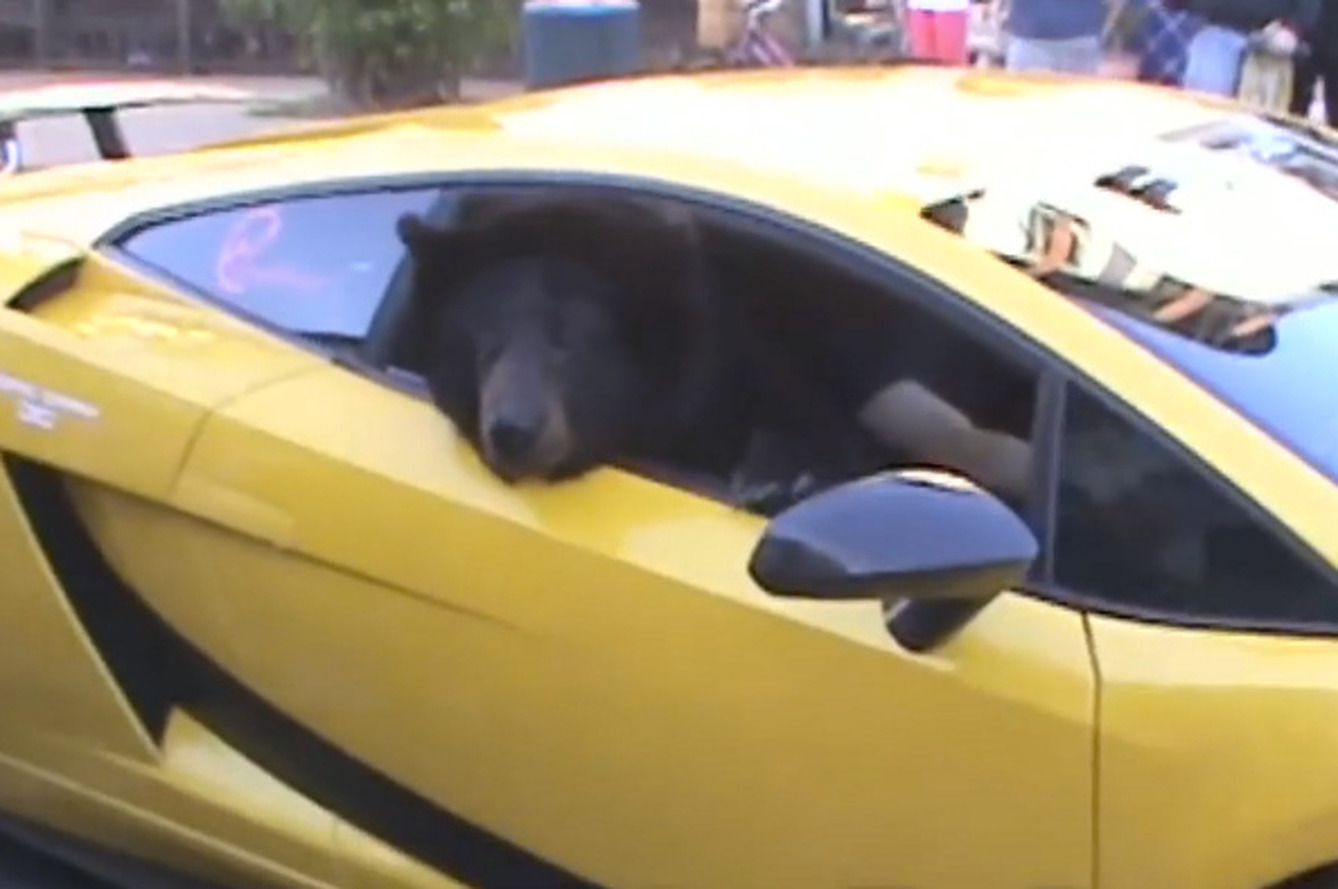 Bear in Lamborghini Shuts Down Traffic in CA